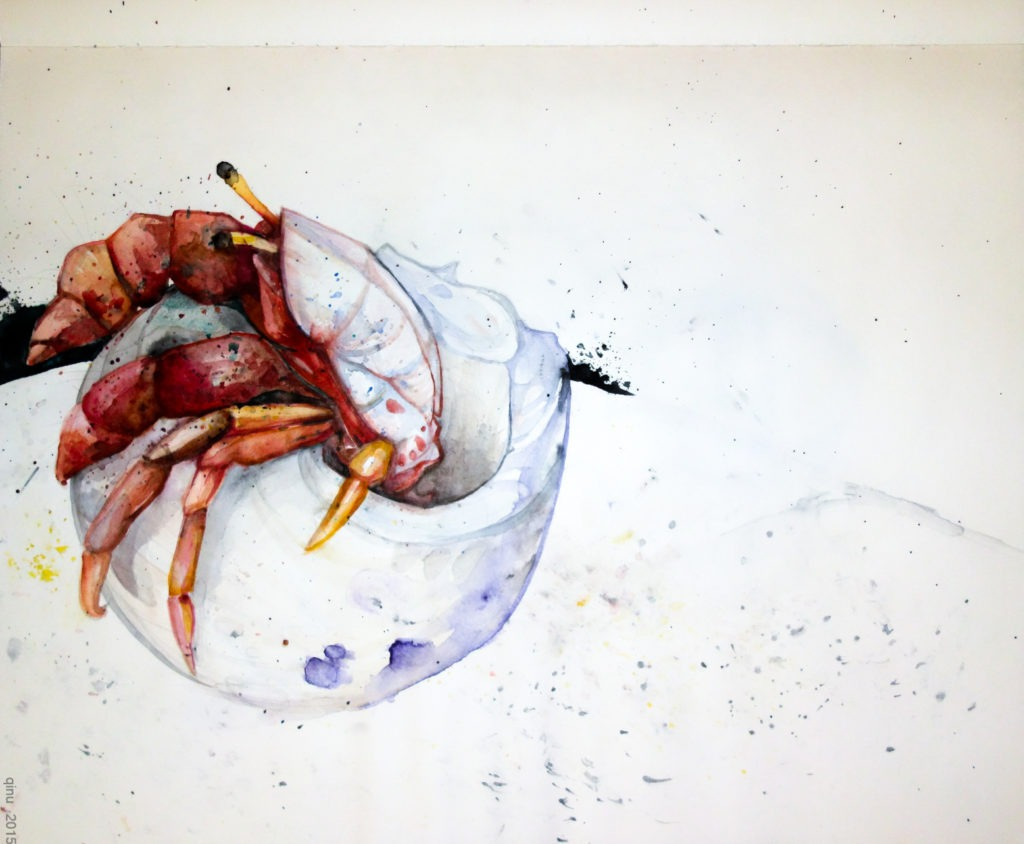 Einsiedlerkrebs - Aquarell / watercolor